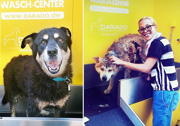 Passau´s Hunde strahlen - das erste Hunde-Wasch-Center der Region lädt zum Vergnügen ein!