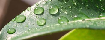 Nachhaltigkeit oder wie wir heute das Morgen beeinflussen!