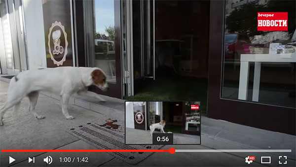 Dog bakery Hov-Hov Beograd - Video from Serbian News